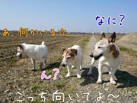 201531982556.jpg