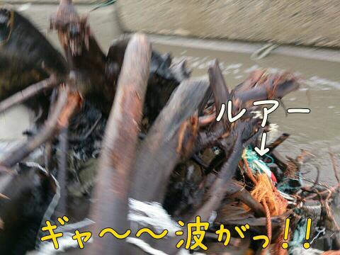 rps20141227_093022.jpg